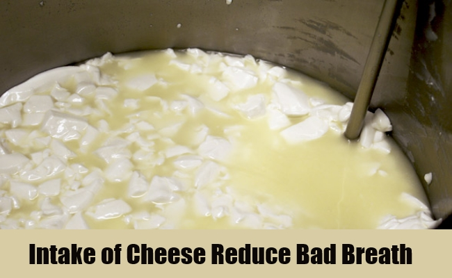 Curd and Cheese