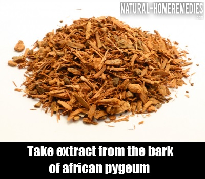 African Pygeum