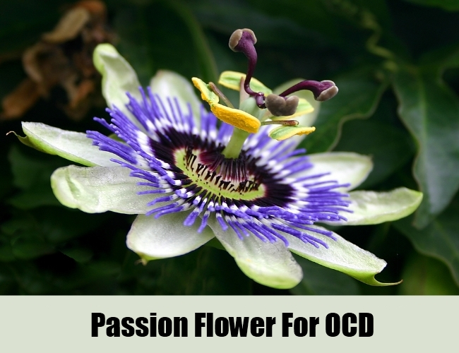 Passion-Flower-To-Cure-OCD