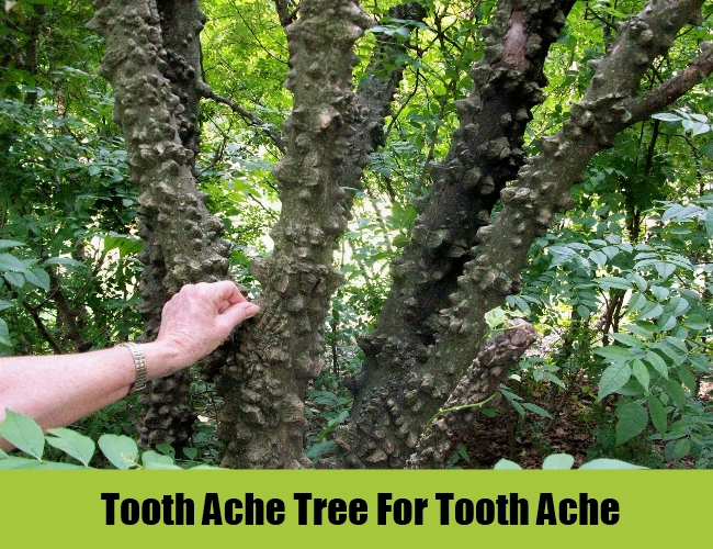 Tooth Ache Tree
