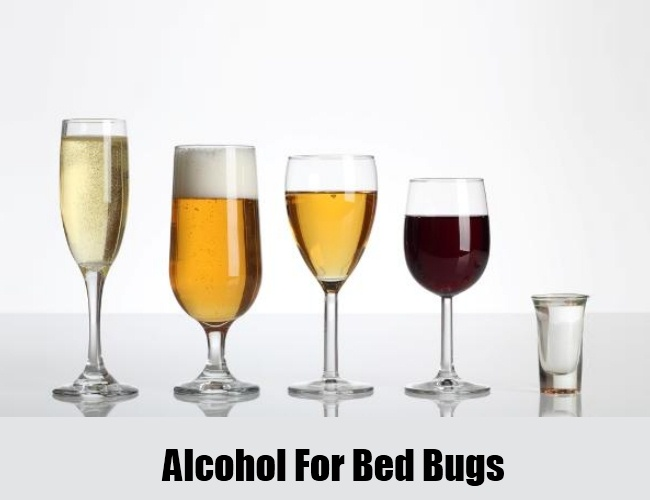 Alcohol For Bed Bugs