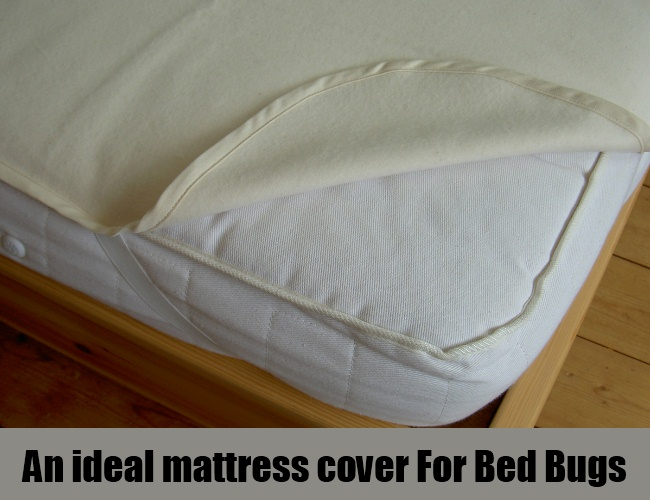 An ideal mattress cover For Bed Bugs