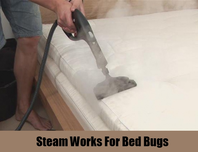 Steam Works For Bed Bugs