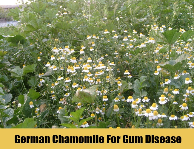 German Chamomile For Gum Disease