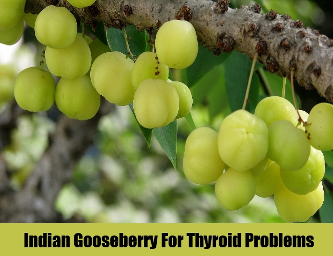 Indian Gooseberry For Thyroid Problems