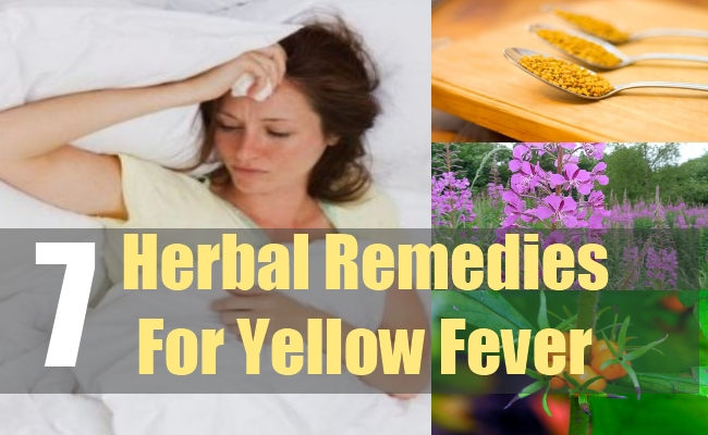 7 Herbal Remedies For Yellow Fever