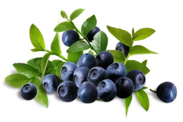 Bilberry And Wild Yam