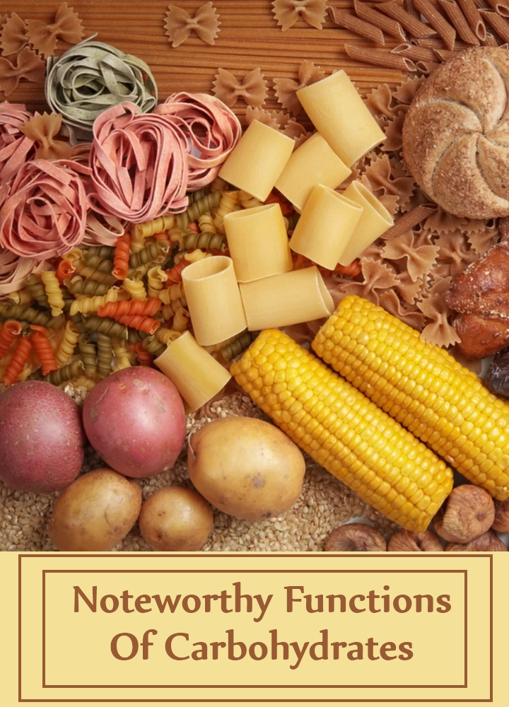 Noteworthy Functions Of Carbohydrates