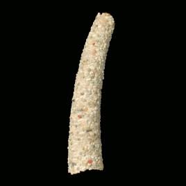 Polychaete worm tube