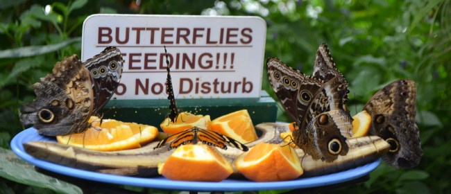 Spread Your Wings At The Butterfly Conservatory – Niagara Falls, Canada