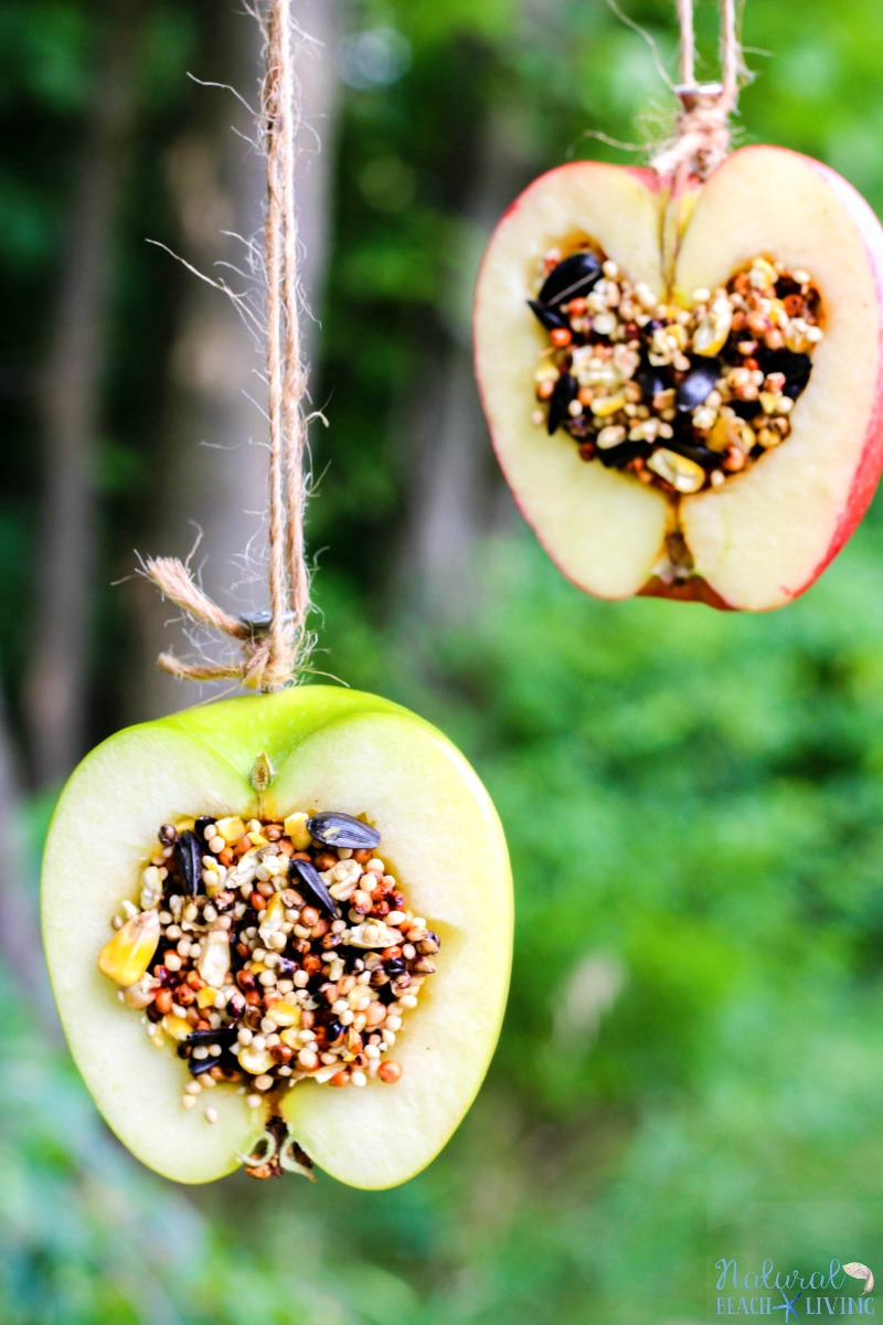 How to Make Apple Birdseed Homemade Birdfeeders | Natural Beach Living