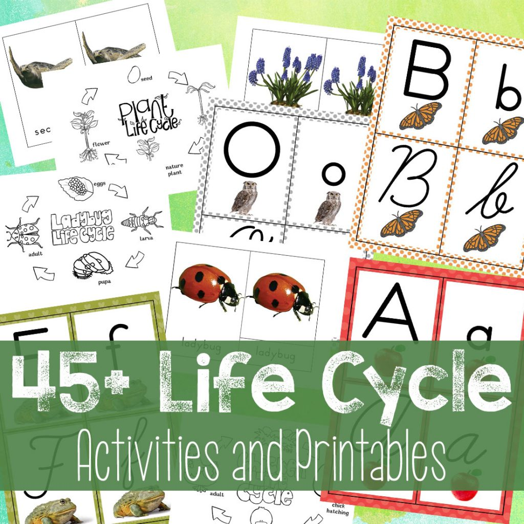 45 Life Cycle Activities And Printables For Kids