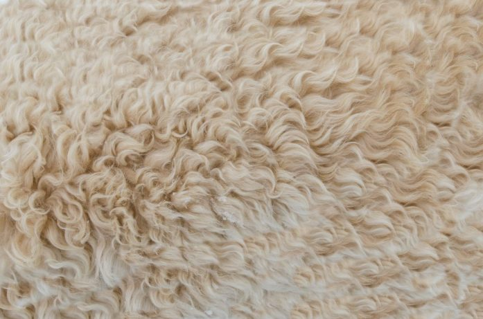 Lanolin is derived from wool