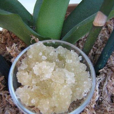 Yuzu Garden Salt Scrub