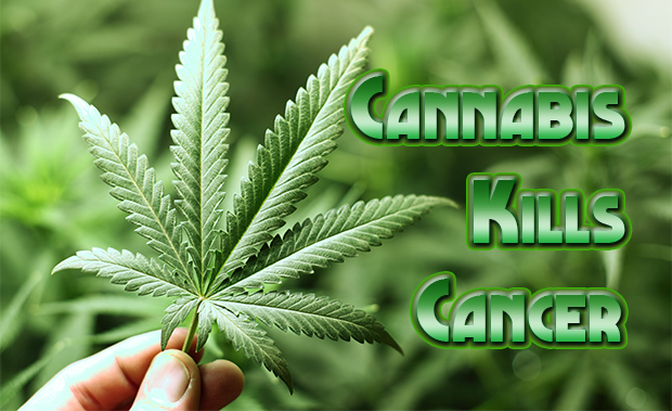 Cannabis and the war on cancer