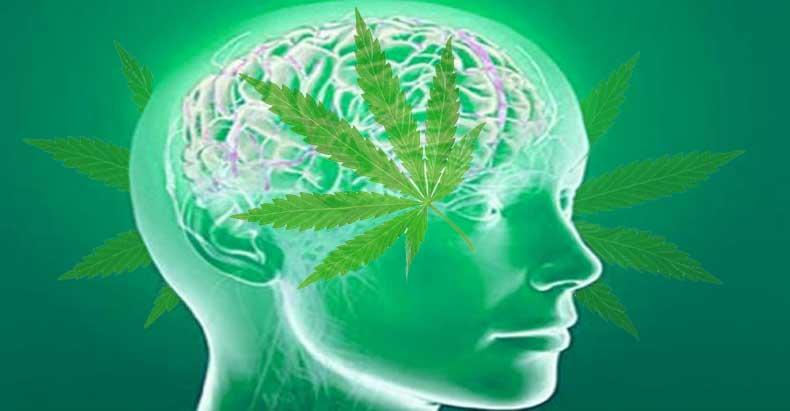 marijuana-jeas-the-brain
