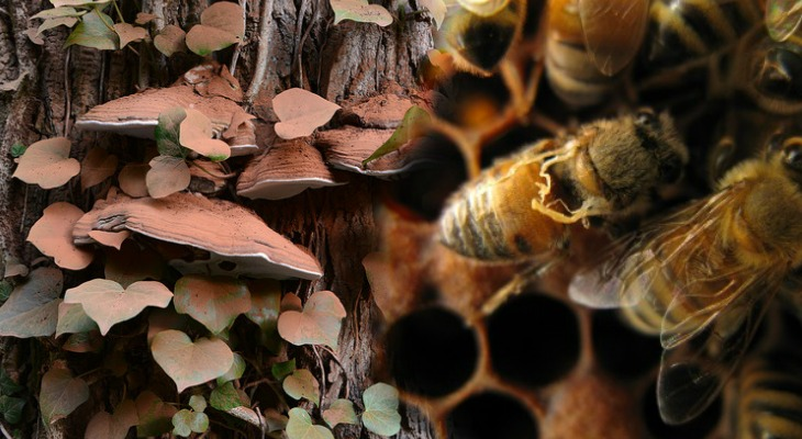 https://i2.wp.com/www.naturalblaze.com/wp-content/uploads/2016/03/Mushroom_Bees.jpg