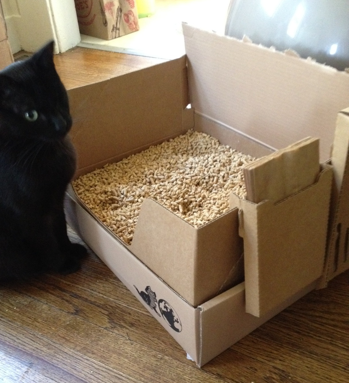 Natural cat litter: the quest for the perfect one   Natural