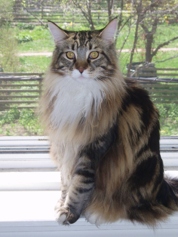 Incurable To Cancer Free In One Year How Nate The Cat Survived High Grade Lymphoma Natural Cat Care Blog