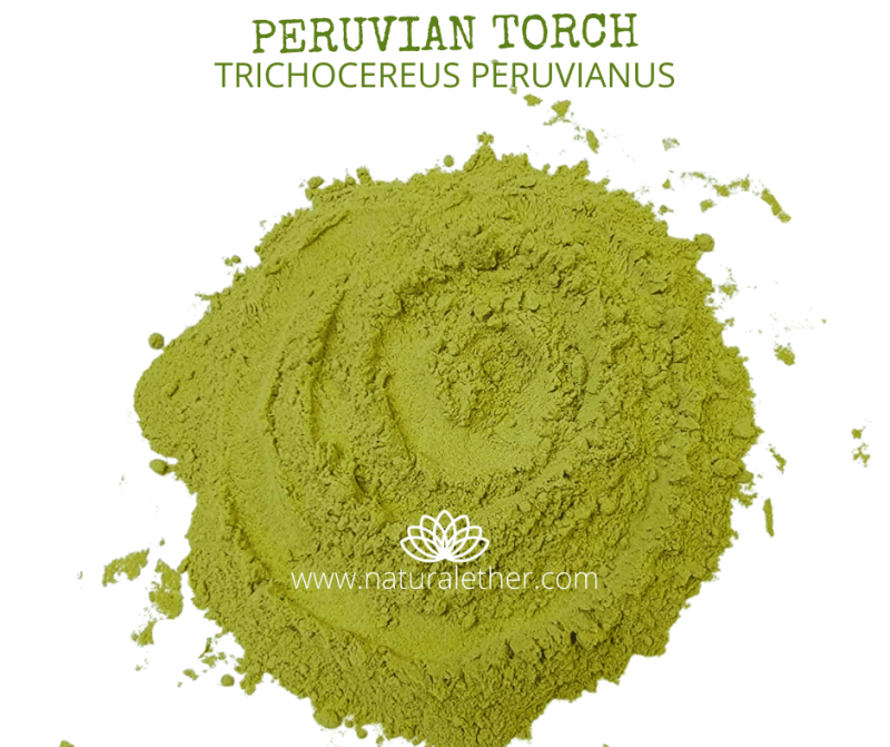 Natural Ether Website Images PERUVIAN TORCH 2