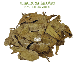 Natural Ether Website Images CHACRUNA LEAVES 2