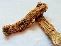 Calamus Root (Sweet Flag)