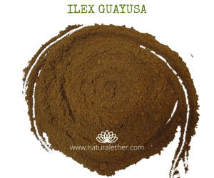Natural Ether Website Images ILEX GUAYUSA 2