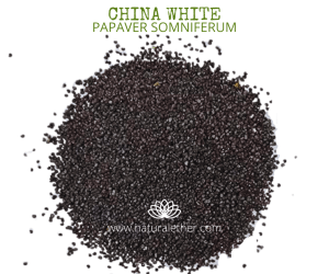 Natural Ether Website Images CHINA WHITE 2