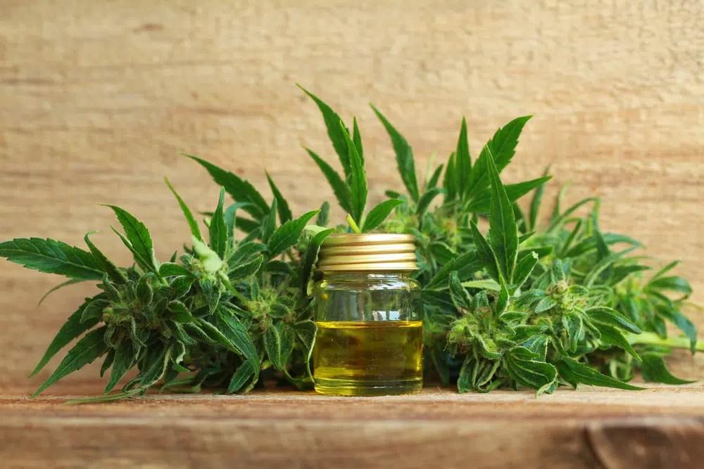 Benefícios Para A Saúde Do Óleo Essencial De Cannabis