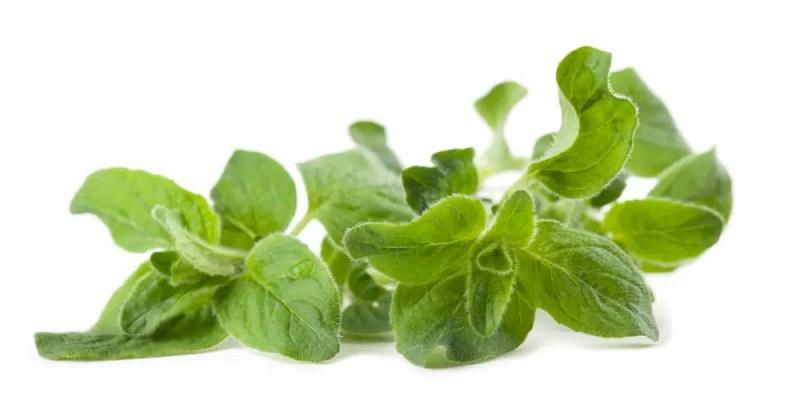 Oregano health benefits