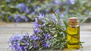 13 Amazing Benefits of Rosemary Essential Oil