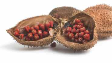 11 Impressive Health Benefits of Annatto (Atsuete)