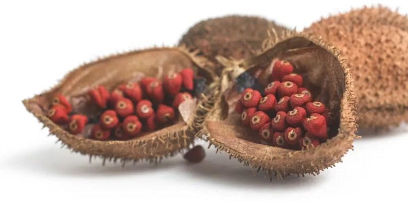 11 Impressive Health Benefits of Annatto (Atsuete)