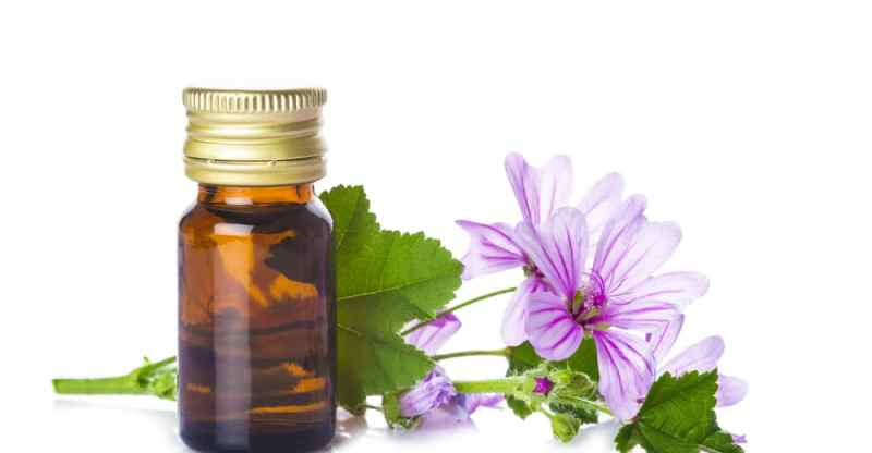 11 Impressive Health Benefits of Mallow Essential Oil