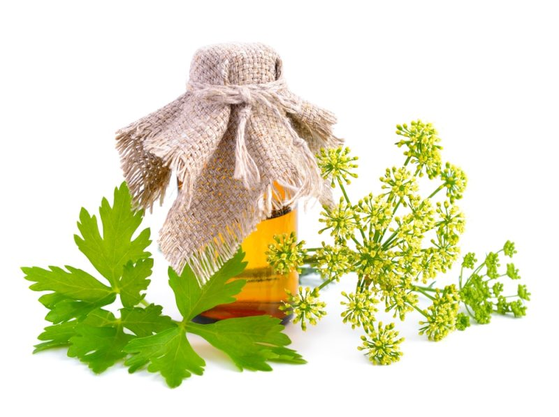 13 Amazing Benefits of Parsley Essential Oil