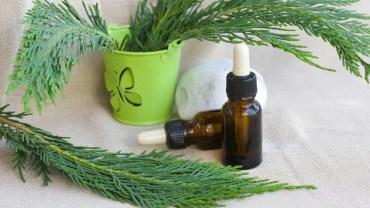 11 Amazing Benefits of Thuja Essential Oil