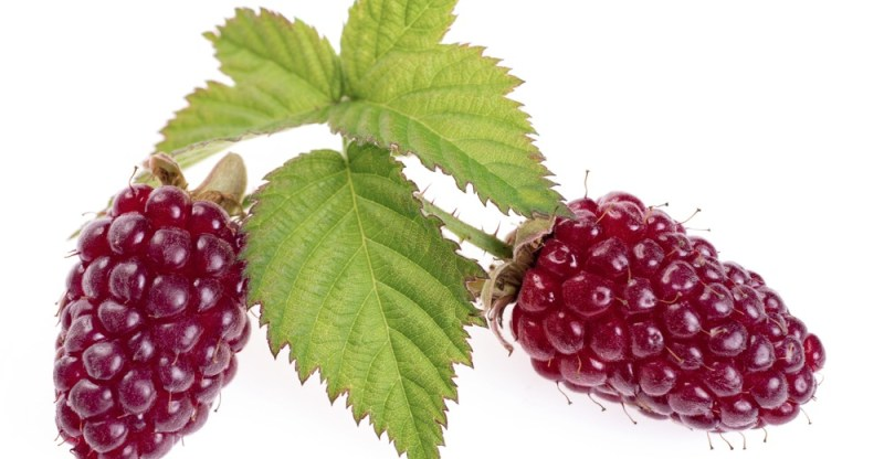 11 Amazing Health Benefits of Loganberry