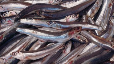 11 Amazing Health Benefits of Anchovies