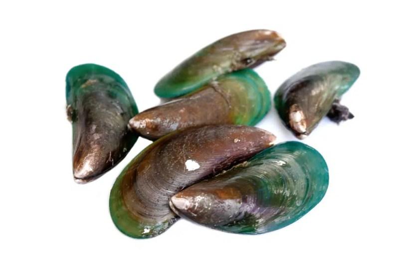 11 Amazing Benefits of Lipped Mussel