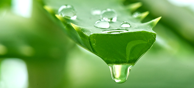 aloe-vera-for-natural-hair-juice