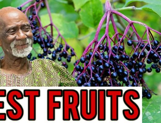 Fruits Dr Sebi
