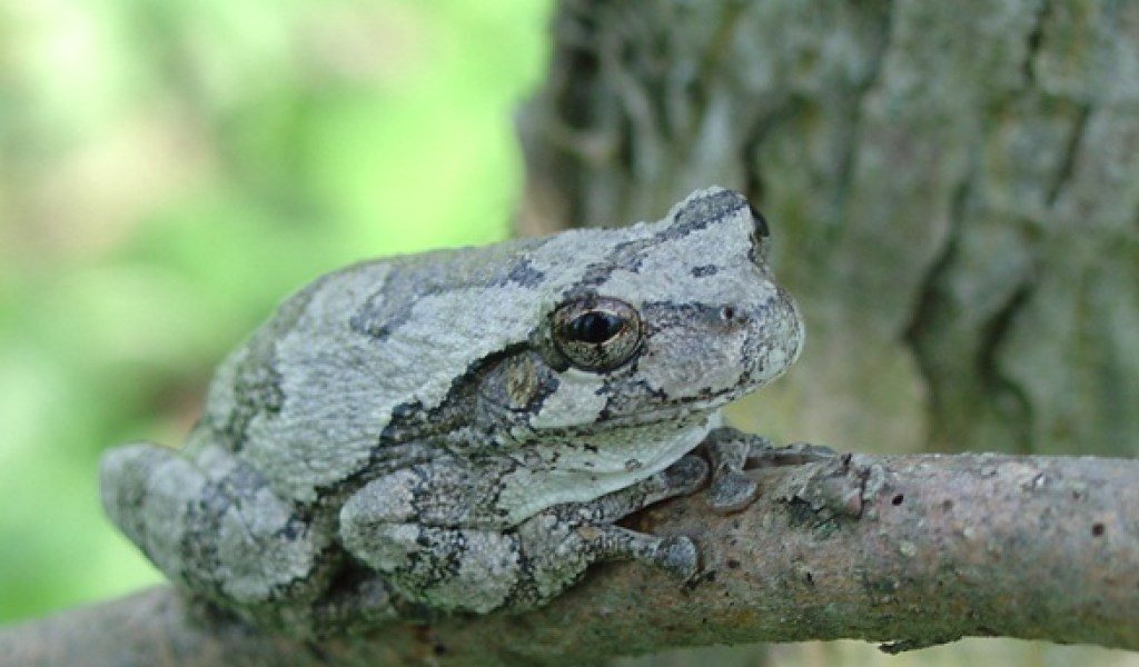 Breeds Of Frogs - Photos of Animals