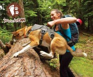Montecan senderismo con perros