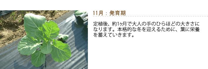 11月-発育期