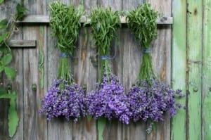 6 ervas aromáticas que repelem moscas