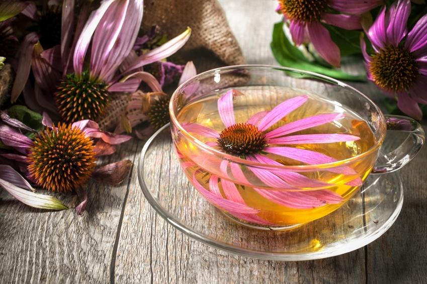 Kết quả hình ảnh cho Echinacea Tea