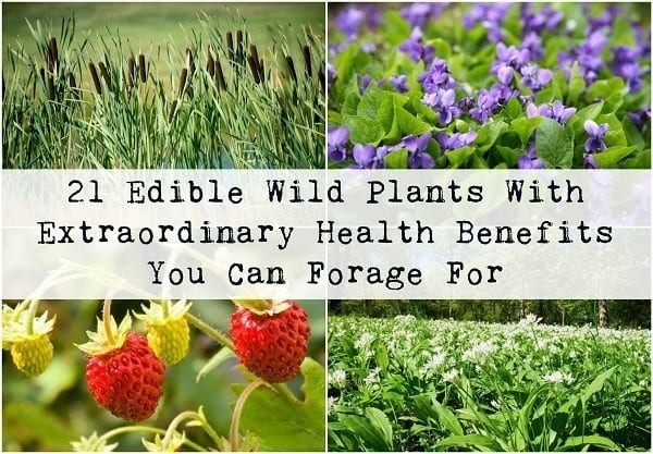21 Edible Wild Plants With Extraordinary Health Benefits
