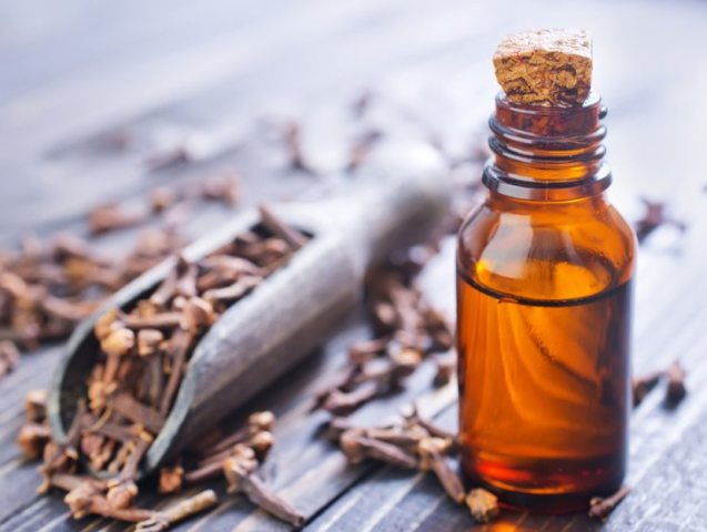 Image result for CLOVE oil