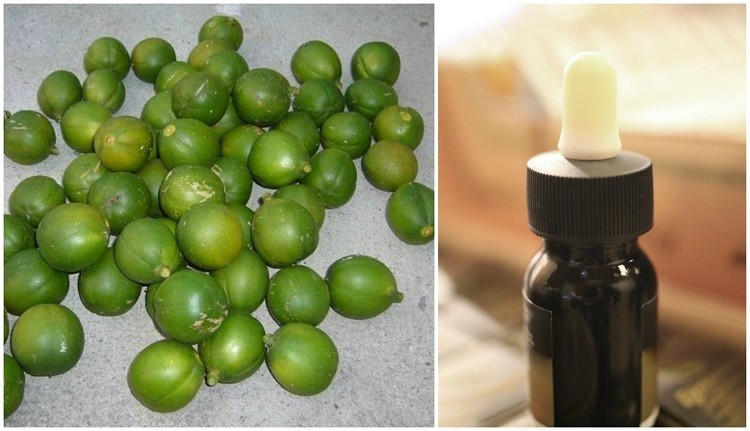 10 Reasons You Need To Try Cacay Oil A Miracle Beauty