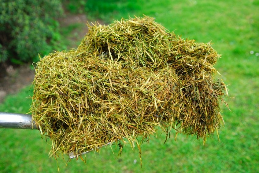 Image result for grass clippings